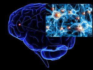 Neurotrasnmisores